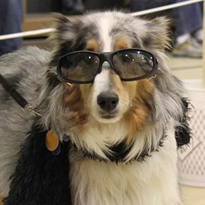 WinterPaws Dog Show